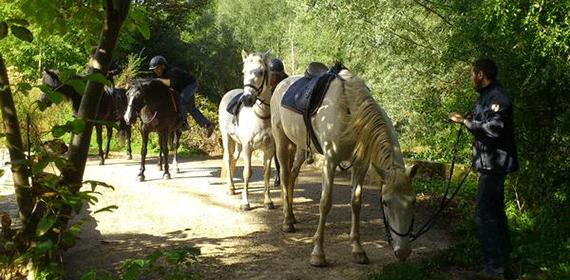 Camping de la rigole - Camping Tarn - Balade en chevaux